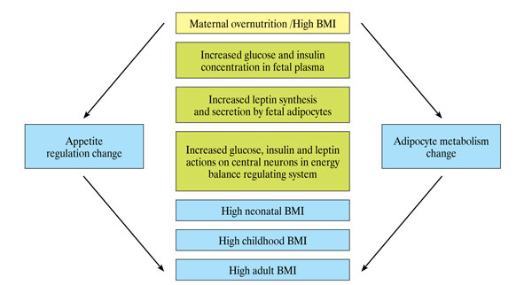 obesity and pregnant women outcomes Conclusion obesity and overweight status at the beginning of pregnancy increase the adverse outcomes of the pregnancy it is important to promote the normalization of bodyweight in those.