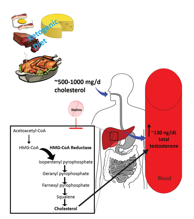 ketogenic diet effect on dhea