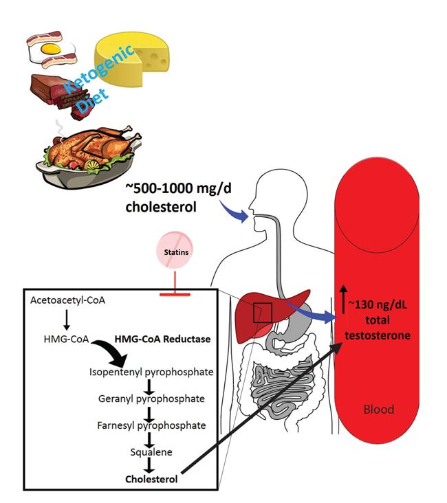 high testosterone keto diet
